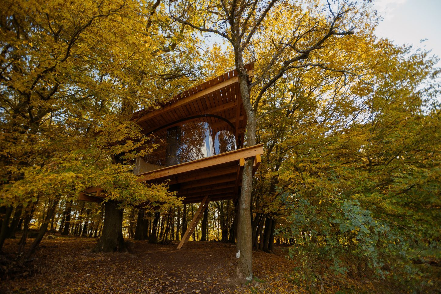 Tree house / Jan Tyrpekl